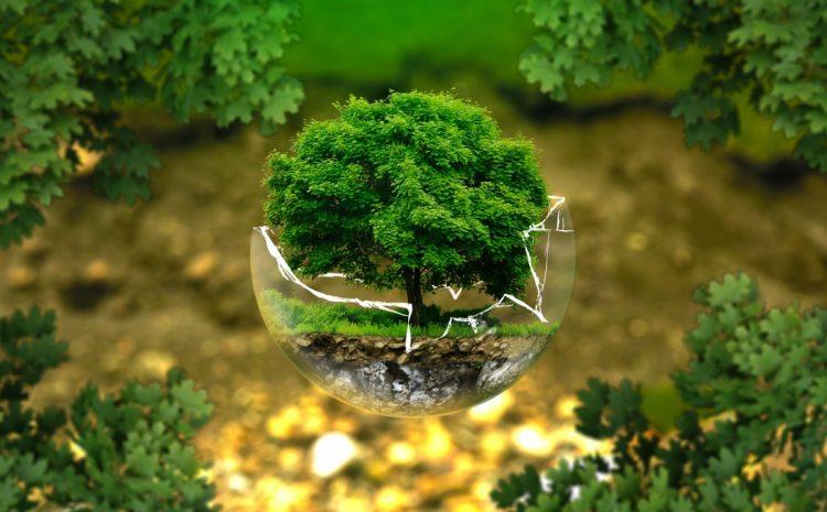 Comment conserver l'environnement en réduisant son empreinte écologique?